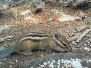 Фауна Алханов, Природа національного парку Алханай, The nature of National Park Alkhanai