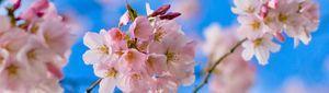 Квіткові аромати
