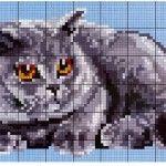 Схема британського котика для вишивки бісером