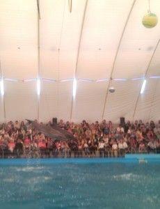 Шоу дельфінів в Одесі,