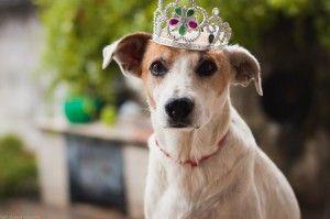 Кращі собаки для будинку і квартири